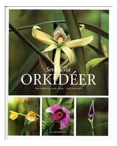 Sensuella orkidéer