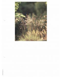 Minnesblad utan text -gräs.fotografi 10-p