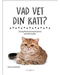 Vad vet din katt?